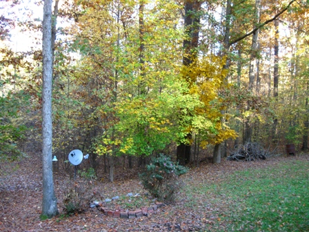 Backyard-Nov2008 001